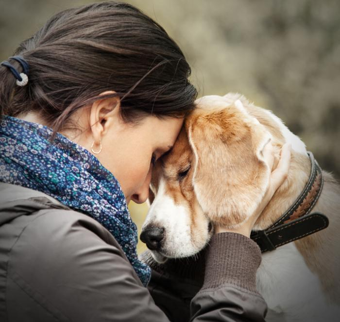 How Dogs can Recognize Human Emotions