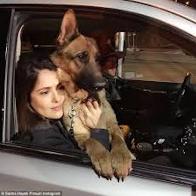 Salma Hayek devastated after beloved dog Mozart found dead on her ranch image(SelmaHyek)