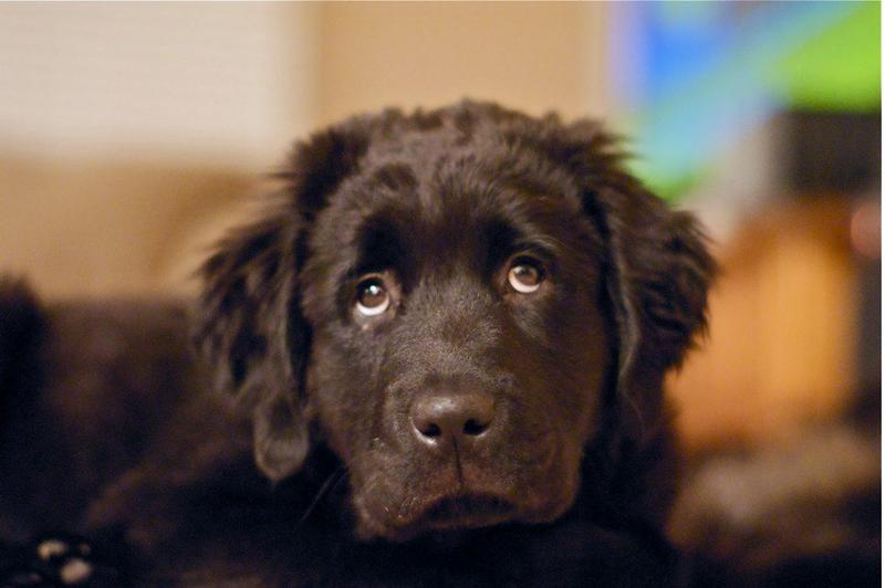 Puppy receives video message from his brother