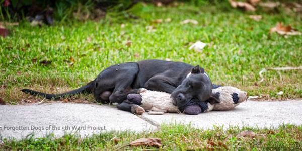 Abandoned dog lies on sidewalk hugging stuffed animal for comfort