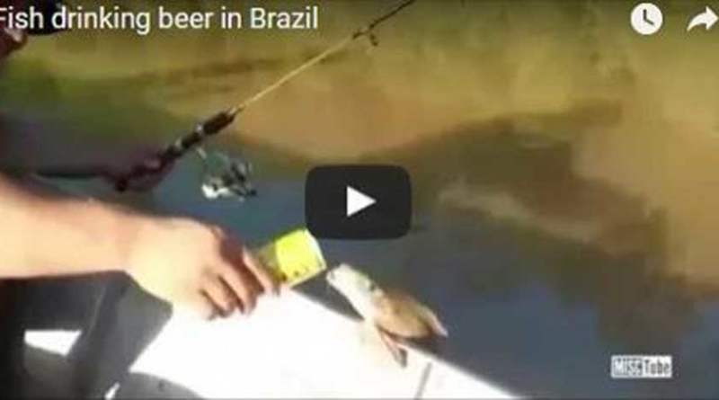 WTF!! Fish drinking beer in Brazil!