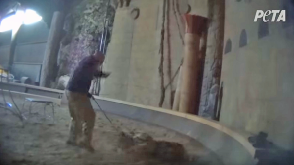 Michael Hackenberger is facing animal cruelty charges after video footage surfaced last December that appeared to show him hitting a tiger with a whip. Credit - PETA