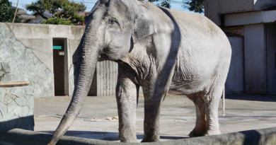 Hanako-World's loneliest elephant who spent her life alone dies