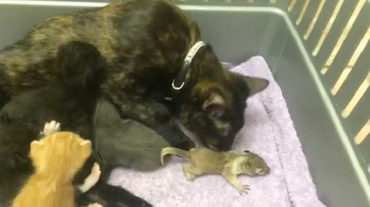 Watch mother cat's reaction to baby squirrel