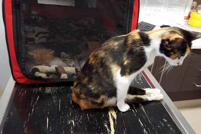 Paralyzed cat drags herself to the spot where she left her babies