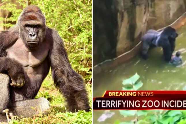 Boy 'still doing well' following Cincinnati Zoo fall, family calls for donations in gorilla Harambe's name