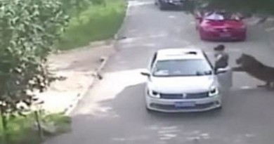 Family argument in wildlife park leaves woman dead after she leaves car and gets eaten by tiger