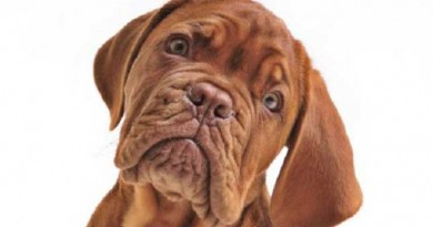 Your dog understands what you're saying... read the research