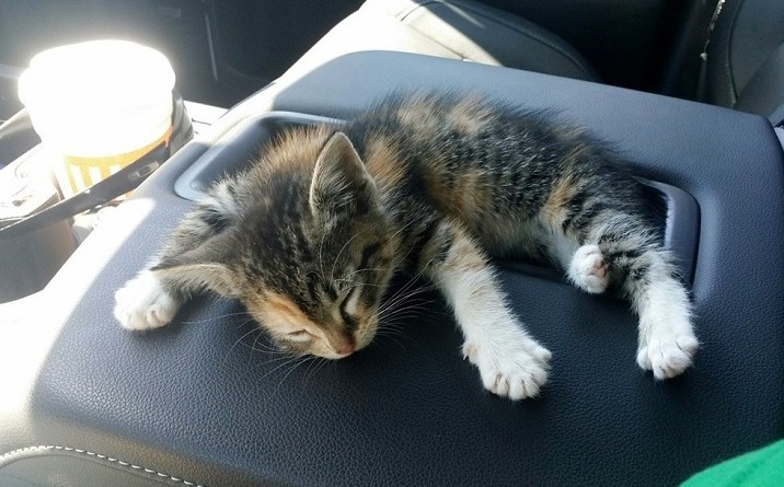 Homeless kitten found her home In her rescuer's truck!