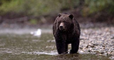 Man survives bear attack and posts video on social media. (VIDEO)
